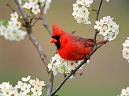 Thought when I saw the cardinal