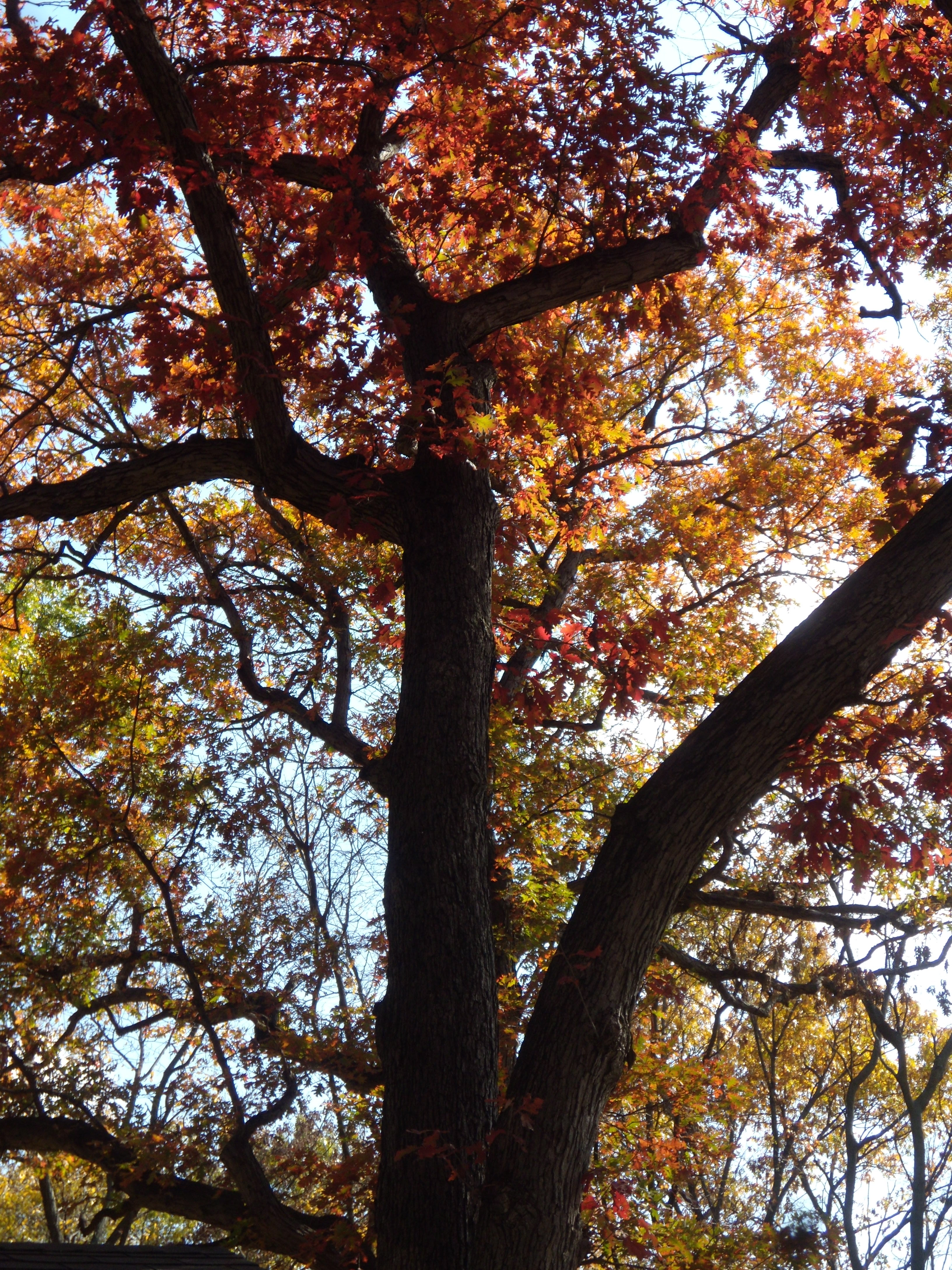 Autumn: A Time of Atonement and Bounty